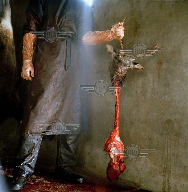 A farmer butchering a deer.