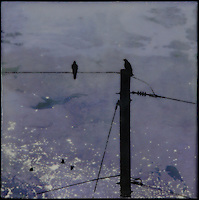 Photo transfer of talking crows on telephone line over satellite image of earth at night with encaustic painting.