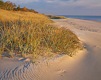 Point Beach State Park, WI  <br /> Edge of beachgrass covered dunes along the shoreline of Lake Michigan Point Beach State Forest