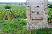 Near the village of Puligny Montrachet, France