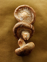 Fresh Shiitake mushrooms shitake raw
