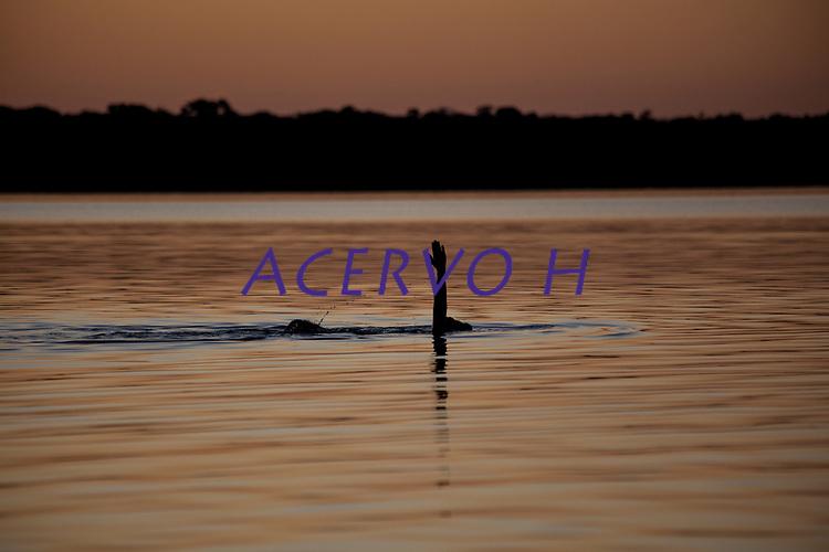 Aldeia dos &iacute;ndios Kamaiur&aacute; a beira do lago Ipavu, no Parque ind&iacute;gena Xingu.<br /> <br /> Igarap&eacute;s e tribut&aacute;rios da bacia do Xingu pr&oacute;ximo a aldeia.<br /> <br /> O Kwarup (nome do ritual na l&iacute;ngua kamaiur&aacute;) &eacute; considerado o grande emblema do Alto Xingu e trata-se de uma cerim&ocirc;nia funer&aacute;ria, que envolve mitos de cria&ccedil;&atilde;o da humanidade, a classifica&ccedil;&atilde;o hier&aacute;rquica nos grupos, a inicia&ccedil;&atilde;o das jovens e as rela&ccedil;&otilde;es entre as aldeias. Ao longo dos meses que se seguem at&eacute; o encerramento ocorrem, n&atilde;o necessariamente todos os dias, dois tipos de dan&ccedil;as e o toque de longas flautas (uru&aacute;, na l&iacute;ngua dos Kamaiur&aacute;), sempre retribu&iacute;dos com oferecimento de alimentos pelos &ldquo;donos&rdquo; do Kwarup. O foco de orienta&ccedil;&atilde;o dessas atividades rituais &eacute; sempre a cerca sobre a sepultura. No p&aacute;tio da aldeia promotora do rito, cada falecido homenageado &eacute; representado por uma se&ccedil;&atilde;o de tronco de cerca de dois metros. S&atilde;o de uma esp&eacute;cie vegetal que tem distintas denomina&ccedil;&otilde;es conforme as diferentes l&iacute;nguas xinguanas. Os Kamaiur&aacute; a chamam de Kwarup, a mesma madeira com que o her&oacute;i m&iacute;tico fez as mulheres que enviou para se casarem com o jaguar. Os troncos s&atilde;o colocados um ao lado do outro, de p&eacute;, embutidos em buracos de 50 cm de fundo. S&atilde;o pintados e ornamentados com adornos plum&aacute;rios e cintos masculinos. A &uacute;nica distin&ccedil;&atilde;o entre os troncos que representam homens e os que representam mulheres &eacute; que os primeiros s&atilde;o guarnecidos com mechas de algod&atilde;o n&atilde;o fiado. Tamb&eacute;m os homens comuns falecidos t&ecirc;m direito a ser representados por troncos, por&eacute;m menos grossos e com ornamenta&ccedil;&atilde;o mais simples. Os esp&iacute