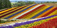 Hokkaido Furano,