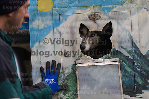 Dog looks out from a kennel during the FISTC Dog Cart European Championships in Venek (about 136 km Norht-West of capital city Budapest), Hungary on November 22, 2014. ATTILA VOLGYI