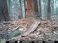 SVT Camera Trap Photos - April 20-May 4, 2011