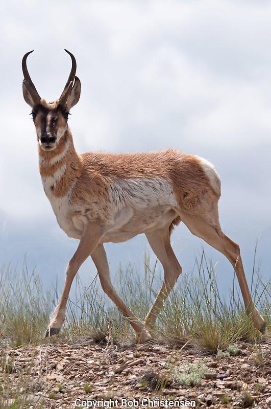 Montana Wildlife Photos
