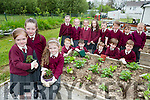 Melanie Sheehan, Sinead Galvin and Sadhbh Scully and the their class mates from the Senior and Junior infants in Knockaderry NS Farranfore who have started a home garden