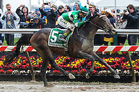 BALTIMORE, MD - MAY 21: Exaggerator #5, ridden by Kent J. Desormeaux, wins the 141st running of the Preakness Stakes at Pimlico Race Course on May 21, 2016 in Baltimore, Maryland. (Photo by Sue Kawczynski/Eclipse Sportswire/Getty Images)