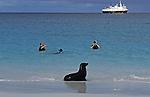 Snorkling with a sea lion, Gardiner Bay, Isle Esponola , Galapagos Islands