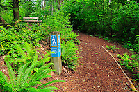 View of Main Entry Trail and Bench in Bellevue, Washington's Weowna Park.