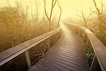 Bobcat Boardwalk, Shark Valley, Everglades National Park, Florida
