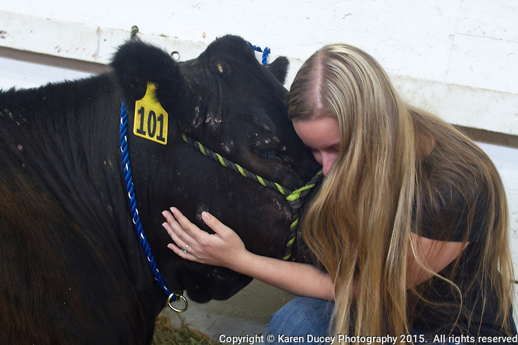 Alie Kale, 19, from Tahoma, Wash. has raised Stockey, a 13 month old steer since last summer.  &quot;He's very stubborn.&quot; she says. He is currently 1,200 pounds. When she first got him he was 300-400 pounds.She showed him at the Washington State fall fair.  He was born on March 19, 2014 and she got him in April 2014 while in her FFA class at Tahoma High School. She sold him at the fair in September 2014 for $800 to Chase Smith, 18 from Fife high School.  He got sponsorships from several businesses to help for the cost of food and showings. Smith worked with him for 2 -3 hours a day for about 5 months including baths, walking him &quot;Its a lot of hard work.&quot; he said. He shared responsibilities with another student - he fed him in the morning at the Fife FFA barn<br /> <br /> Kale says she wants to be a farmer. &quot;I'd never touched a cow before.&quot; she said &quot;I was completely in love. So now I'd really like to have a cow and a pig farm.&quot;<br /> <br /> She says of Jim Roxstrom &quot;He took a city girl and made a country girl out of me.&quot;Says Smith &quot;Somebodies got to do all the dirty work and the other person on the other end gets all the money.&quot;<br /> <br /> &quot;I'm going to miss it.&quot; says Smith who lives in a condo. &quot;I don't like condos, apartments or the city.&quot; The FFA barn is close by. From Fife.<br /> <br /> Smith said he would make a little money due to Les Schwab who bumps everyone's price up.<br /> <br /> About sending him to slaughter Kale said &quot;They always know.  he knows.&quot; &quot;He's sad. You can see it in his eyes.&quot; &quot;Everyone underestimates cows. They're like big, powerful dogs. If you train them they're really great animals to have.&quot; &quot;He loves having the spot under his chin scratched . &quot;she says.<br /> <br /> <br /> <br /> Students in the FFA and 4H programs participate in the auction of livestock including steers, lambs and hogs in the Northwest Junior Livestock Show at the Washington State Spring Fair in Puyallup, Wash. on April 19, 2015.  (photo &copy; Karen Ducey Photography)