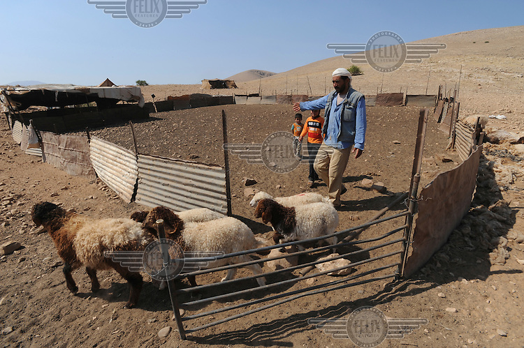 Najah Ali Awda Ka'abnah, a Bedouin man, herds some sheep with his son Aiman and daughter Abir, at the family's encampment in Hadidyeh in the Jordan Valley. The Bedouin living here have been issued with eviction orders by Israeli authorities......
