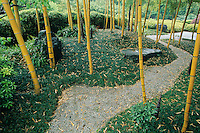 A bamboo grove with yellow stemmed bamboo, a dry gravel stream and low ground cover create a lyrical and scene in the Bamboo Park in Kyoto, Japan