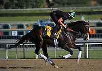 Flat Out, trained by Bill Mott, trains for the Breeders' Cup Classic at Santa Anita Park in Arcadia, California on October 30, 2013.