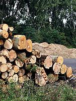 Nederland - Amsterdam - 2019. Amsterdam Noord. Bomen moeten wijken voor nieuwbouw. Hout wordt versnipperd. Biomassa wordt gebruikt voor de energieopwekking of direct als biobrandstof. Foto Berlinda van Dam / Hollandse Hoogte.
