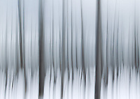 A famous stand of Bobby Socks trees along the parks western road can be a great subject for practicing motion blurs.