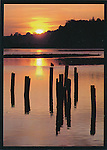 FB 15, Bolinas Lagoon at sunset, 5x7 postcard