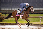 November 1, 2018: Pakhet, trained by Todd A. Pletcher, exercises in preparation for the Breeders' Cup Juvenile Fillies Turf at Churchill Downs on November 1, 2018 in Louisville, Kentucky. Alex Evers/Eclipse Sportswire/CSM