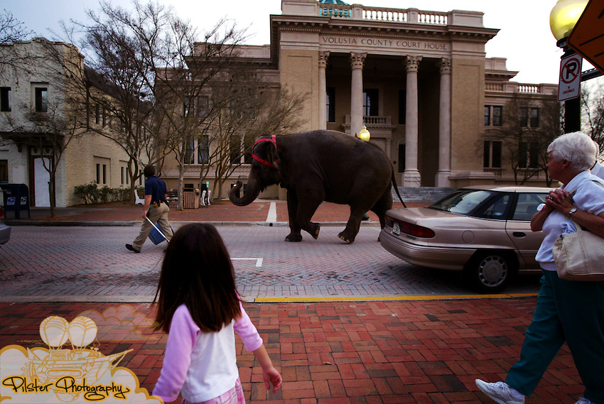 "Spectators watch as Adam Hill, an elephant superintendant for Cole Bros. Circus, walks down Indiana Ave. with Tina Thursday, February 27, 2003, in DeLand. Tina was on her way to paint an original abstract painting. (Chad Pilster).***STAND ALONE FEECH*** .HEADLINE POSSIBILITY, ""PAINTING PACHYDERM"""