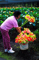 Woman selecting the freshest anthuriums from an open market in Pahoa on the Big island of Hawaii