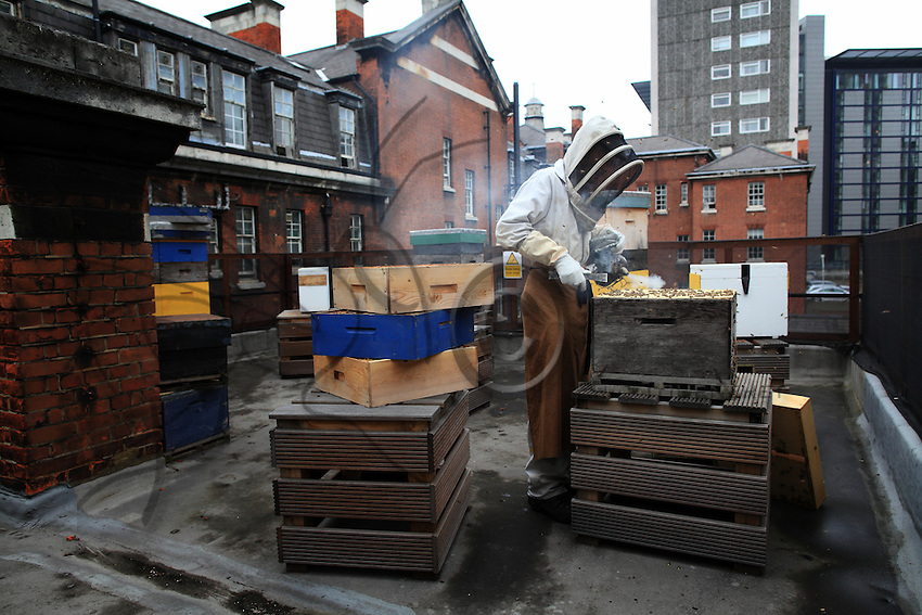 Steve Benbow on the roof of the Tate Britain museum where he produces honey that is sold in the two museums' souvenir shops. His hives are set up on the roofs of the Victorian buildings.