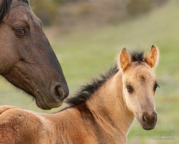 Perspective of foal next to his mom