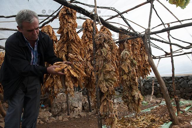Albania - Luigj Simoni è un produttore di tabacco che lavora poco distante da Scutari, nel Nord dell'Albania. Foglie di tabacco ad essicare.