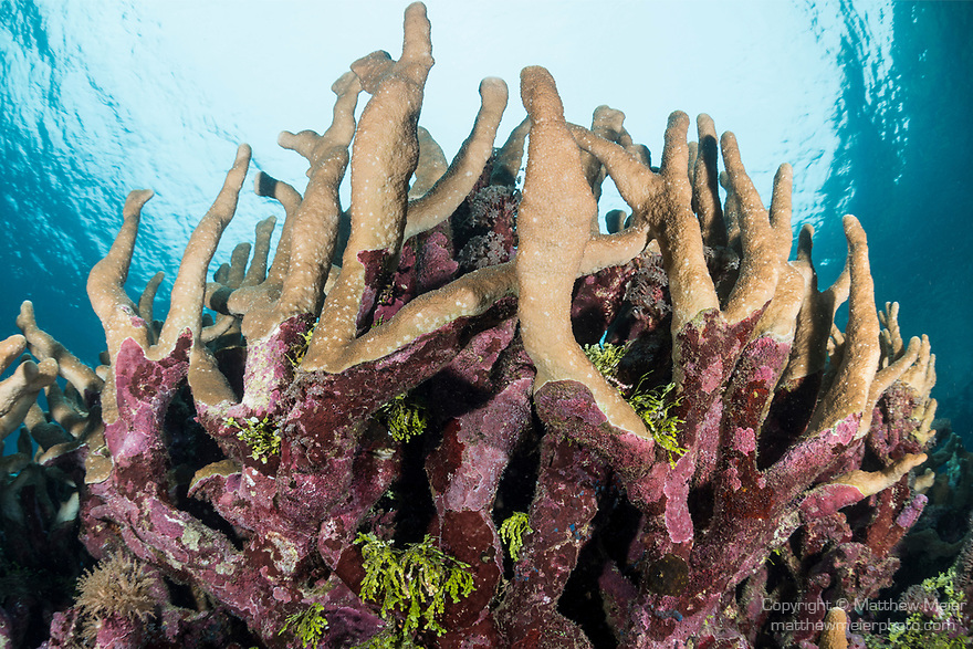 Marovo Lagoon, Solomon Islands; hard and soft corals in a shallow coral garden in late afternoon light, with snell's window overhead