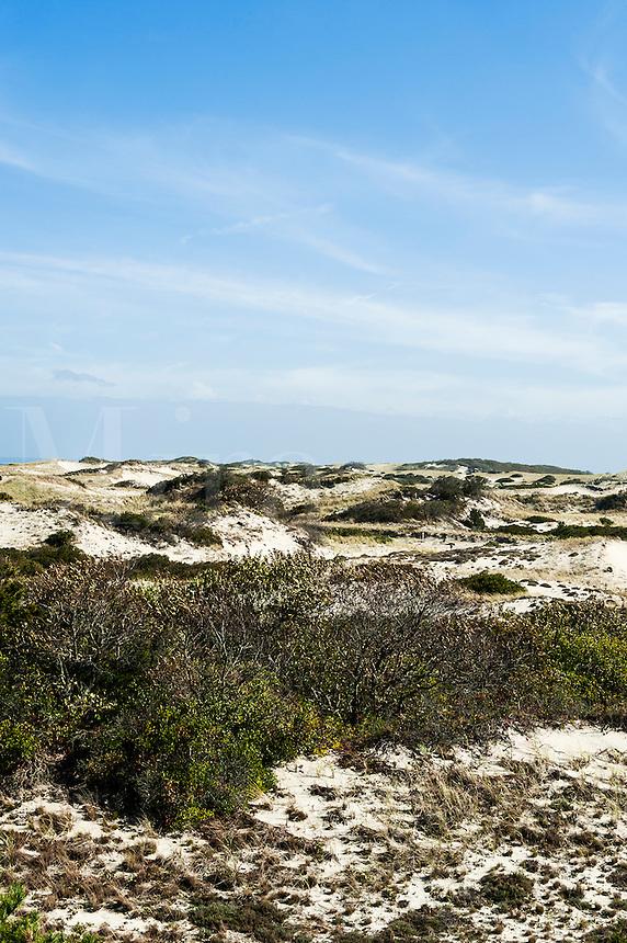 Dunes at Sandy Neck Beach Park, Barnstable, Cape Cod, Massachusetts, MA, USA