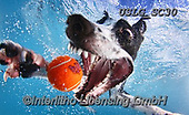 REALISTIC ANIMALS, REALISTISCHE TIERE, ANIMALES REALISTICOS, dogs, paintings+++++SethC_Fleet_IMG_5098rev_PRINT,USLGSC30,#A#, EVERYDAY ,underwater dogs,photos,fotos ,Seth