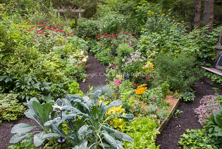 Lush variety of plants in garden views scenics, wide, summer, Rudbeckia, Kale Lacinata blue vegetable, Festuca, Lobelia Fan Scarlet, Cleome Senorita Blush, Solenostemon, Lettuce, Hypericum hybrid, Verbena, Salvia officinalis Variegata, Roses 'O So Smoothie', Pelargonium Contrast, Hosta Great Expectations, Monarda Cambridge Scarlet, annual Begonias, Dianthus barbatus, Lilium, mulched garden path, pine needle much, Salvia farincacea, Heucher, Rhododendron Azalea, Rubus black raspberries, raised beds, mix of perennials, annuals, shrubs, vegetables, summer flowering bulbs, edibles, herbs, flowers and foliage