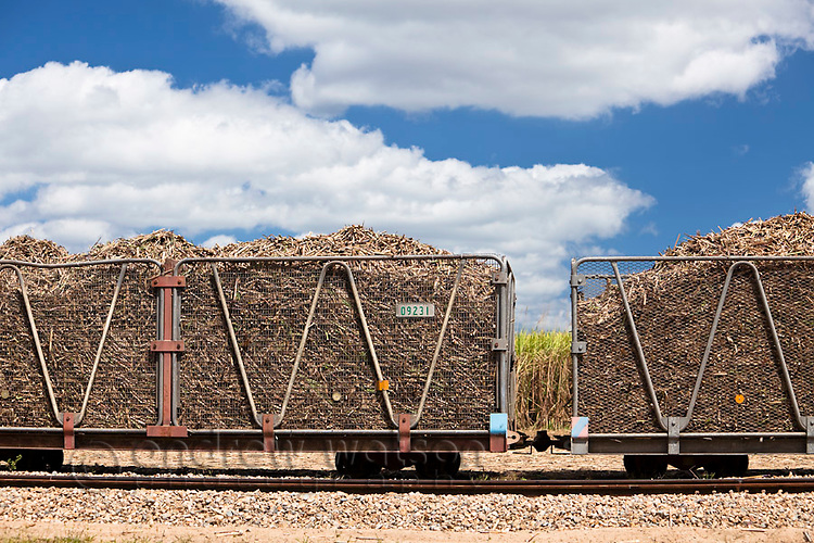 Harvested sugar cane loaded in bins ready to be transported to the sugar mill.  Cairns, Queensland, Australia