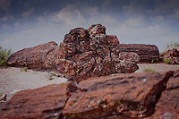Petrified wood in the Petrified Forest National Park near Holbrook Arizona on Route 66.