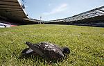 A Hampden bird witnesses Scotland training then dies at the corner flag.