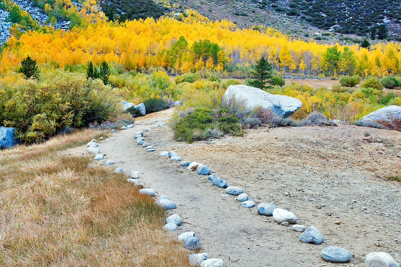 Rock path with fall colored aspens.  Inyo National Forest. Eastern Sierras. California