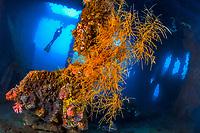 Storage Room, USAT Liberty, Wreck, Bali, Indonesia, Diving, diver, softcoral, Tulamben