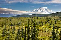 Mt. Denali, North America's Tallest Mountain Visible Along The Tundra Of Denali National Park, Interior, Alaska.