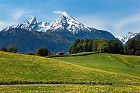 Deutschland, Bayern, Oberbayern, Berchtesgadener Land, bei Bischofswiesen: Fruehlingswiese vorm Watzmann | Germany, Bavaria, Upper Bavaria, Berchtesgadener Land, near Bischofswiesen: spring meadows with Watzmann mountain