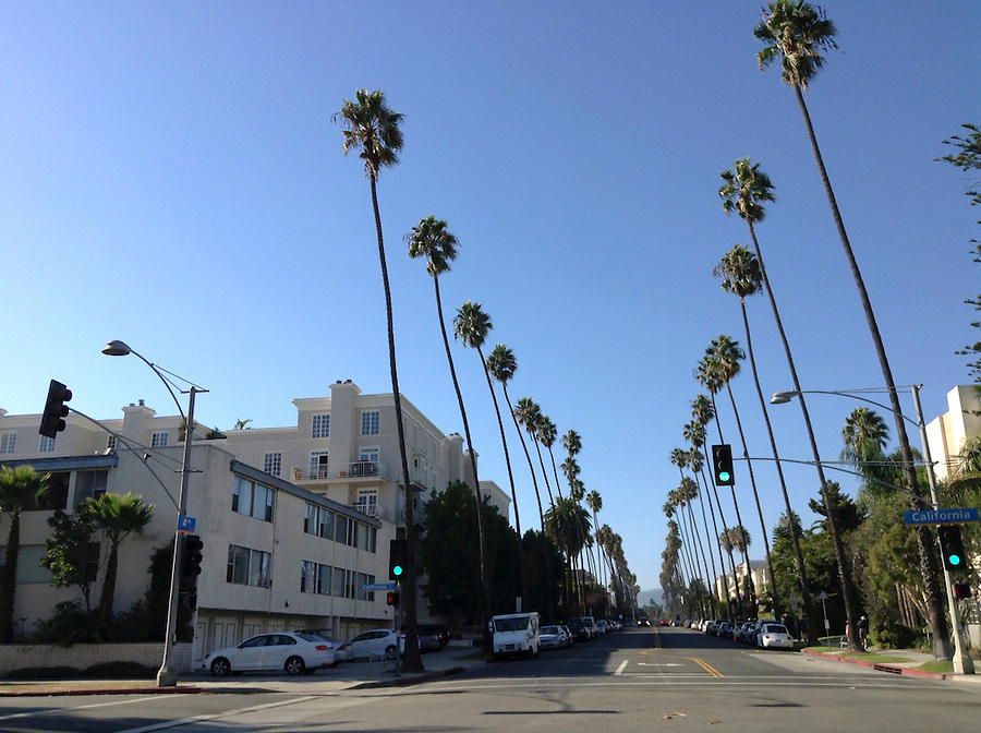 Palm tree-lined streets in Santa Monica, California, CA, USA