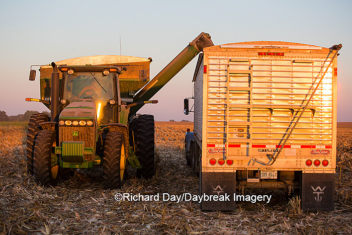 63801-06809 Grain wagon unloading corn into semi trailer in corn field, Marion Co., IL