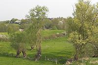 Hecke, Knick, Knicklandschaft im Frühjahr mit Kopfweiden, Kopfweide, kleinräumig gegliederte Wiesenlandschaft, hedge