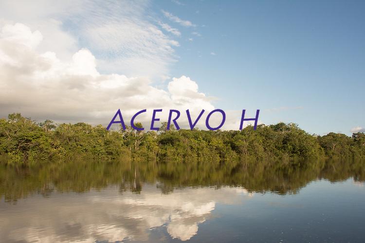 .<br /> .<br /> Imagem feita em 2017 durante expedição científica para a região do Lago Tefé, Tefé, Amazonas, Brasil. A expedição, financiada pelo  Conselho Nacional de Desenvolvimento Científico e Tecnológico, teve o abjetivo de reencontrar espécies de anfíbios descritas pelo explorador Johann Baptist von Spix no ano de 1824.