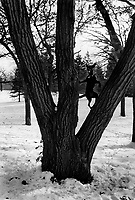 USA. Minesotta State (MN). Minneapolis. A black dog is climbing on a tree. Snow on the ground during the winter season. Domestic animal. 15.02.98 © 1998 Didier Ruef