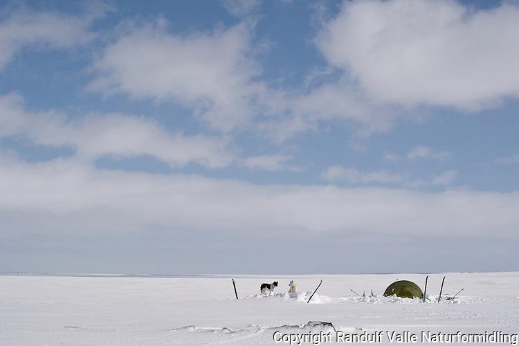 Teltleir på Laksefjordvidda. ---- Camp on Laksefjordvidda.