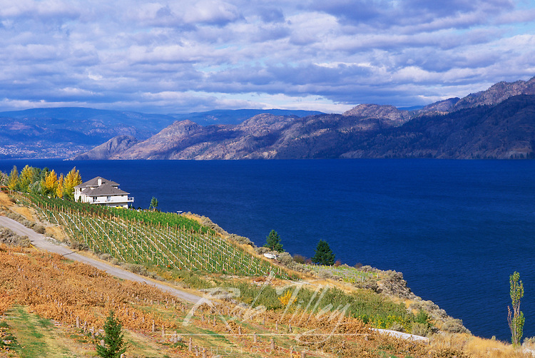 Vineyard on Okanagan Lake, BC