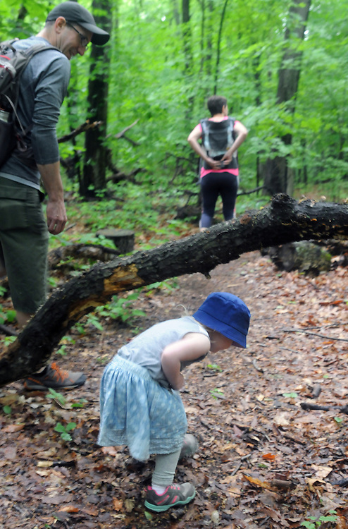 John Peters watches hid daughter, Violet, slip under a tree during a Hike It Baby/ Catskills-Woodstock sponsored hike into the Esopus Bend Nature Preserve in Saugerties, NY, on Memorial Day Monday, May 30, 2016. Photo by Jim Peppler. Copyright Jim Peppler 2016<br /> The hike was led by HIB.Catsjill-Woodstock, Ambassador, Ann Peters, accompanied by her husband, John Peters, their daughter, Violet; HIB chapter co-Ambassador, Ali Troxell, with her daughter, Lucia; and Robin Willens, and her son, Landon. They entered at the Sterley Avenue entrance and walked thru to the landing area on the Esopus.