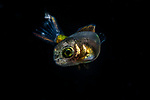 Fish ID Plz 9-3-18-9326