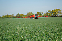 Apply fungicide to winter wheat - Norfolk, May