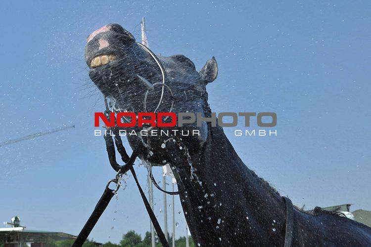 10.07.2010, Hamburg, GER, Reitsport, 141. IDEE Deutsches Derby, im Bild Feature die Pferde bekommen nach dem Rennen eine kuehle Dusche<br /> Foto &copy; nph / Witke *** Local Caption *** Fotos sind ohne vorherigen schriftliche Zustimmung ausschliesslich f&uuml;r redaktionelle Publikationszwecke zu verwenden.<br /> <br /> Auf Anfrage in hoeherer Qualitaet/Aufloesung